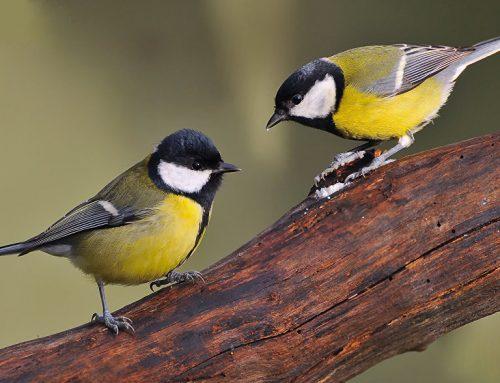 В Великобритании закрыли церковь, чтобы не беспокоить птиц