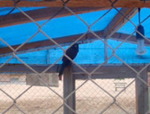 Оштрафован владелец объекта в прибрежной части Баку, где содержались дикие птицы