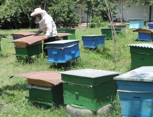 В Азербайджане утвержден порядок субсидирования пчеловодов