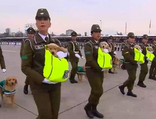 Щенки стали главными героями военного парада