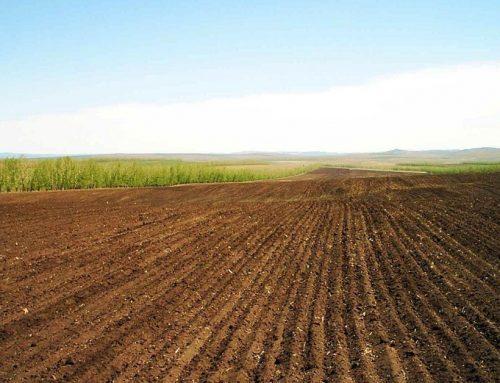 В Азербайджане изменены правила аренды сельхозземель